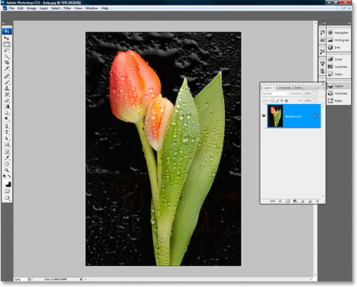 An image open inside Photoshop CS3