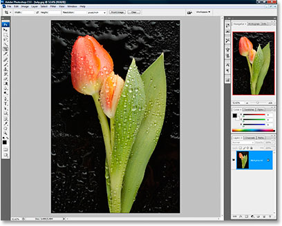 A photo of a tulip open in Photoshop CS3.