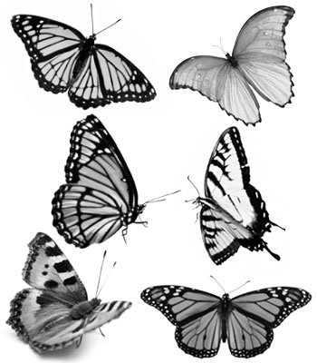 http://www.photoshopessentials.com/images/photoshop-brushes/butterflies/butterfly-brushes.jpg