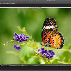 Photoshop tabbed documents and floating windows tutorial